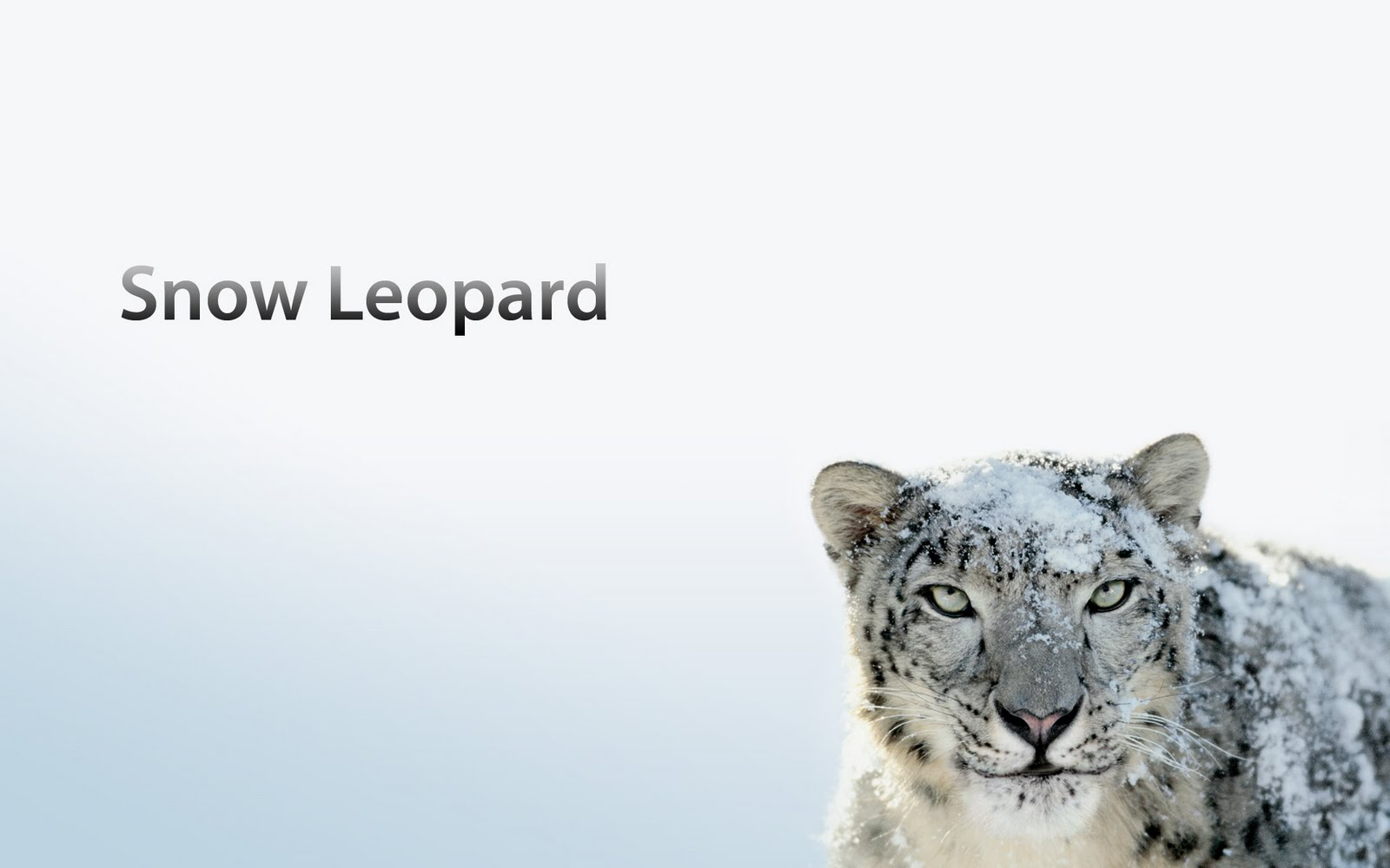 I have a late 2009 Macbook Pro that had OS X Snow Leopard 10.6.8. I downloaded OS X Mavericks to upgrade and began the installation. After my Mac restarted and ...